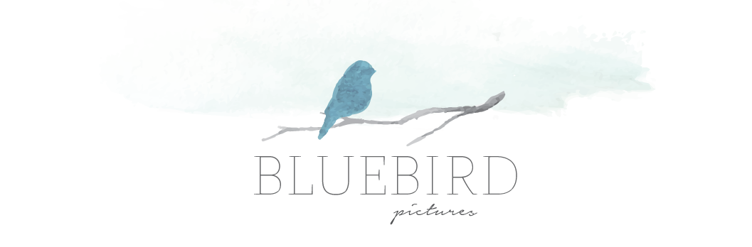 Bluebird Pictures //  Bree Fowles logo
